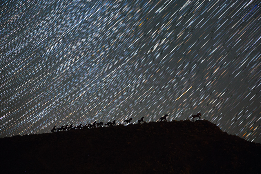 Star Trails behind the Wild Horses Monument